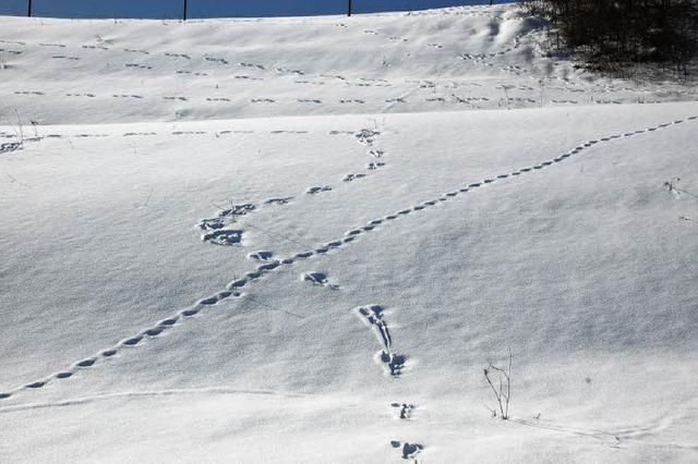 Mit offenen Augen durch die Schneelandschaft