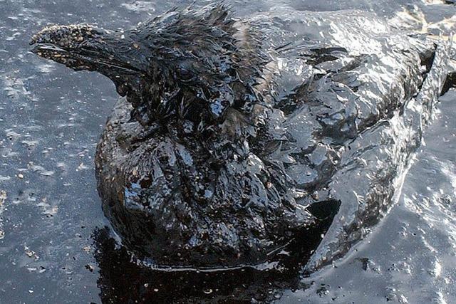 Mehr als tausend Tonnen Öl in Zufluss des Po ausgelaufen