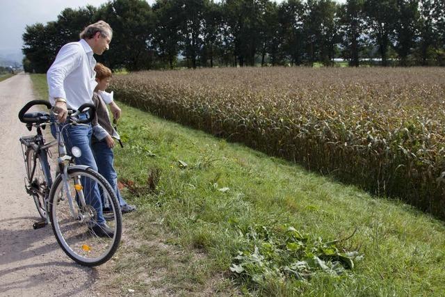 Lebenslange Haft für Mord im Maisfeld