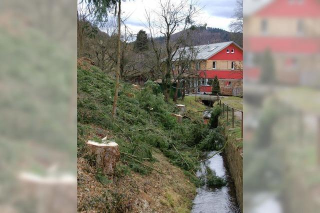 Heftiger Streit um radikale Baumfällaktion