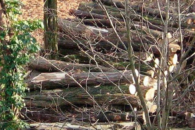 Einmalig wird Holz versteigert