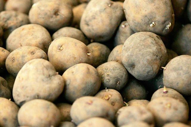 EU erlaubt Gen-Kartoffel