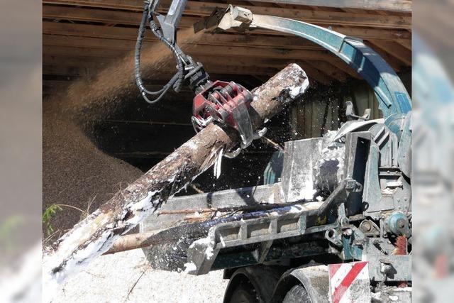 Holzverwertung ist das große Thema