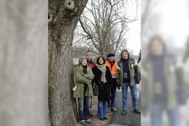 Jeder Stadtbaum trägt eine Nummer