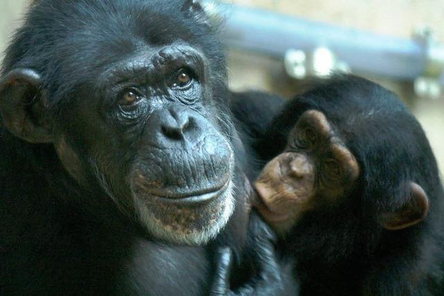 Basels Affen ziehen zum Pharmakonzern