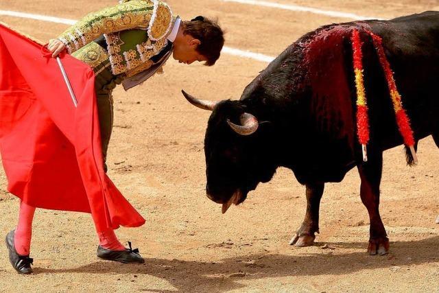 Spanien streitet über Stierkämpfe
