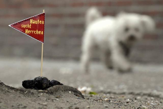 Hundekot auf Weiden – Gefahr für Kühe