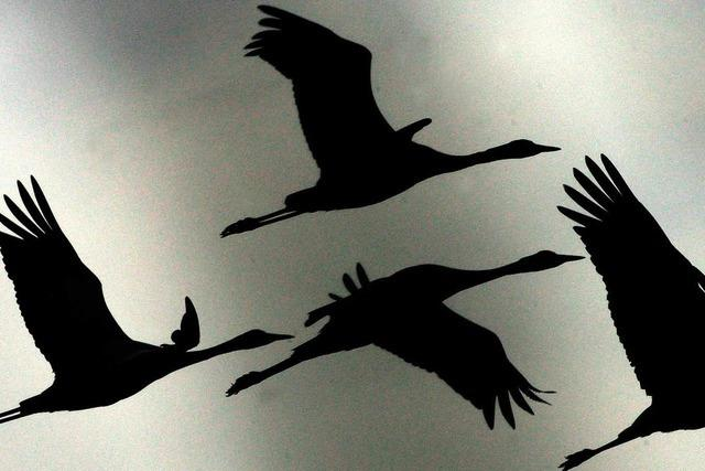 Wintereinbruch: Zugvögel machen kehrt