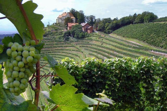 Von Durbach hoch zum Schloss Staufenberg