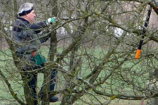 Bäume beim Streuobstpflegetag restauriert