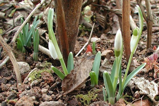In Birkendorf zieht der Frühling ein