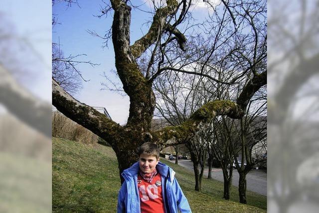 Mein Freund, der Apfelbaum
