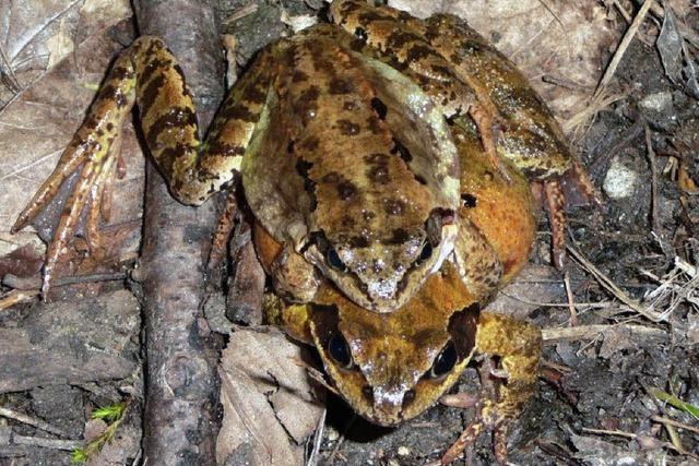 Die Pflege von Flora und Fauna am Strüpfelgraben