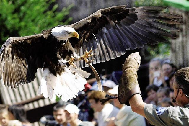 Die Adler fliegen wieder