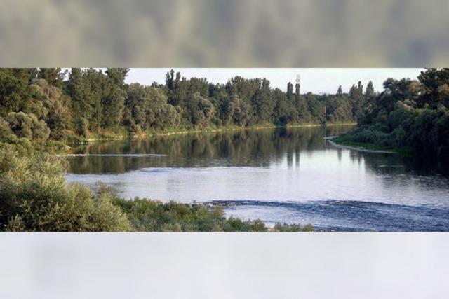 Hartheim will Kahlschlag am Rhein verhindern