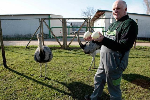 Nandus in Altenheim: Hier kümmert sich Mann ums Brutgeschäft