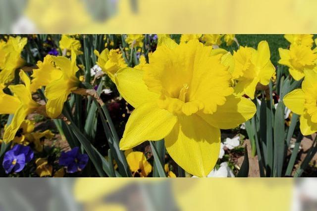 Zu Ostern blühen die Glocken