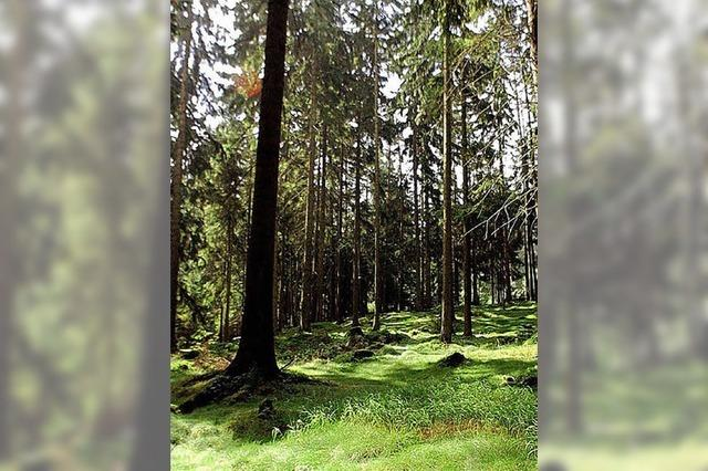 Das Waldjahr in Dachsberg war besser als erwartet