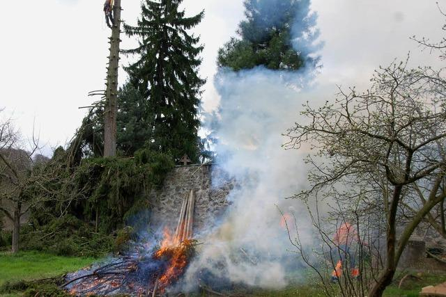 Aufwändige Baumfällaktion