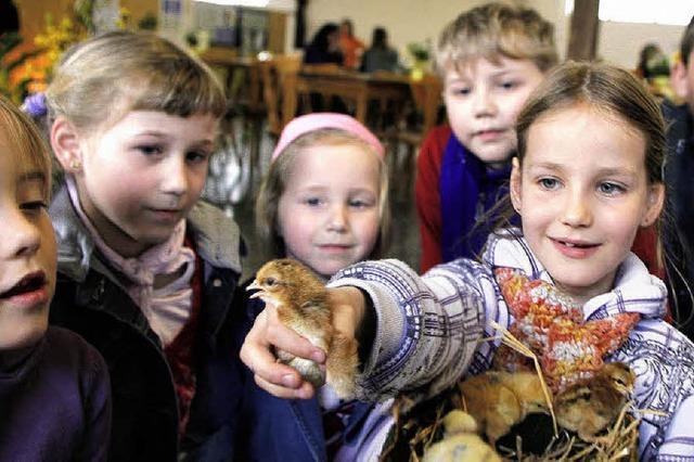 Wissenswertes rund um Huhn und Ei