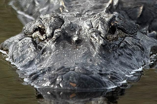 Allein unter Alligatoren