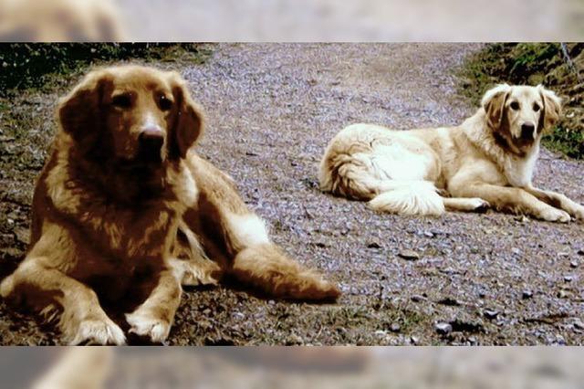 Zwei Hunde verschwunden