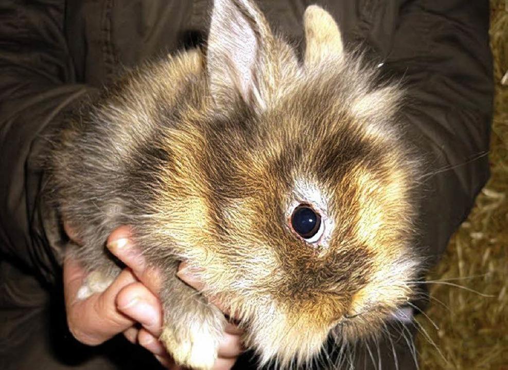 Kaninchen Ronnie     Foto: PRIVAT