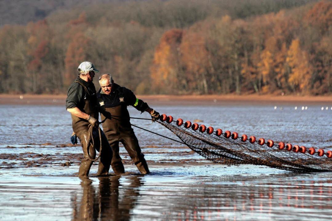 Fischer fischen Algen aus überdüngtem Sundgau -Teich     Foto: Jerom gil