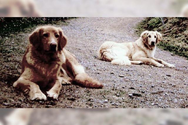 Besitzer und Polizei suchen nach Hunden – und ihren Entführern?