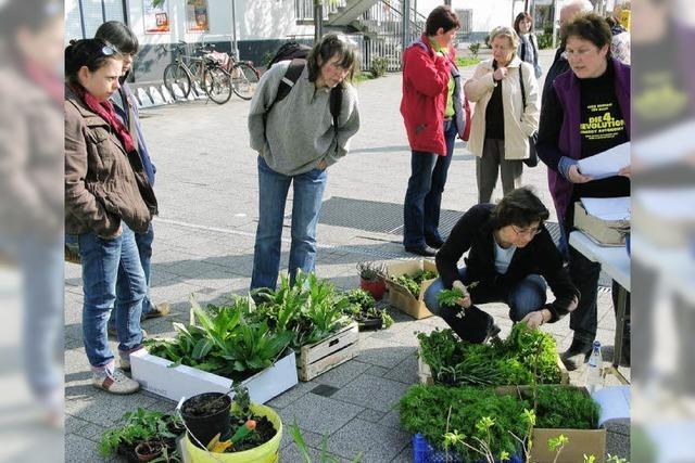 Kräuter, Tomaten und Blumen finden Abnehmer