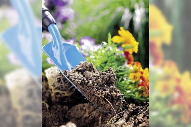 Pflanzenklau – Diebe buddeln 69 Büsche aus