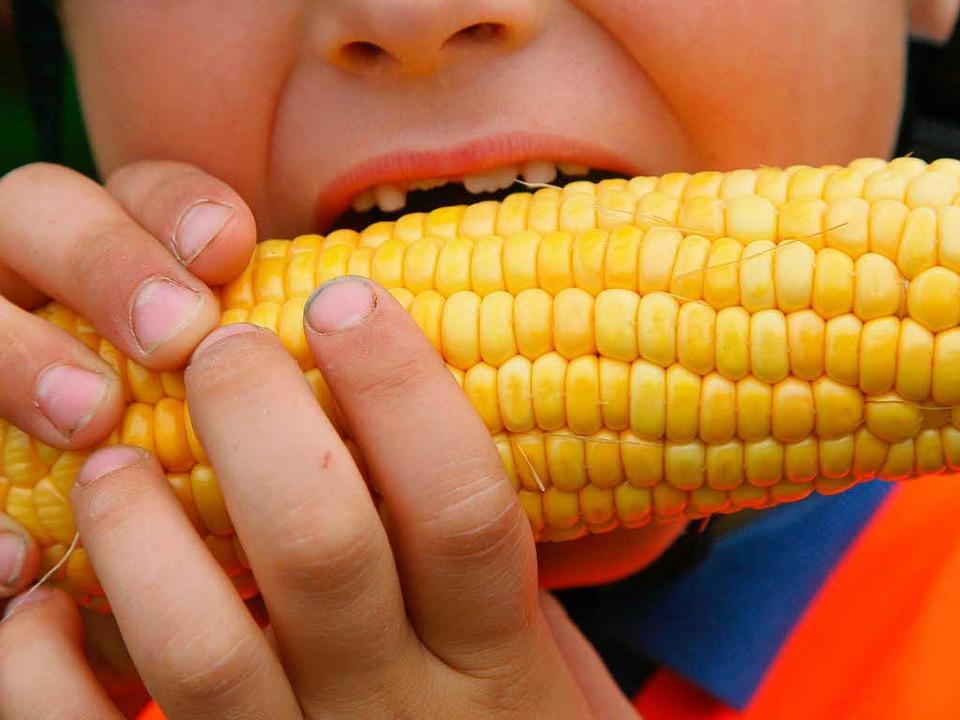 Mais oder Gen-Mais – das ist hier die Frage?    Foto: dpa