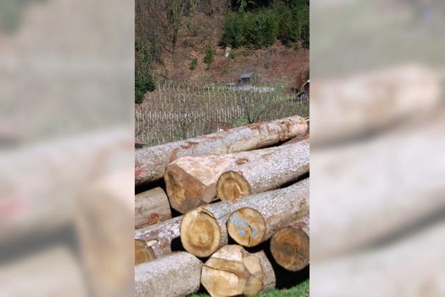 Geld für Straßenbau und Erlös aus dem Holzverkauf