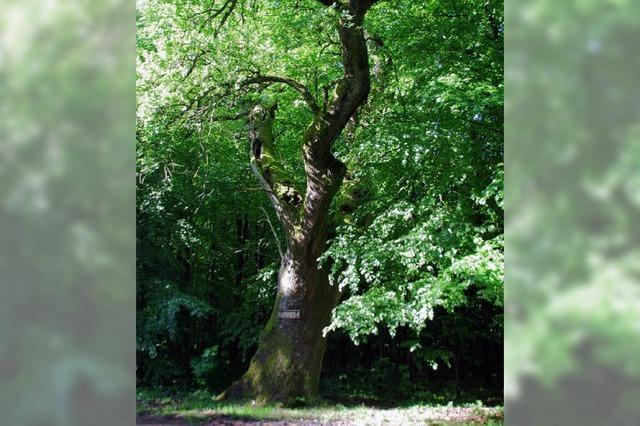 30 560 neue Bäume bestellt