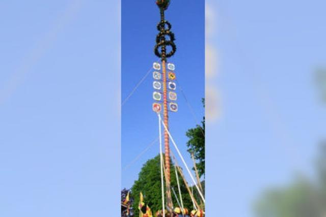 Der Maibaum ist 24 Meter hoch