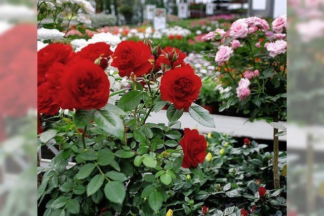 Gärtnereien wollen Lust auf Frühling machen