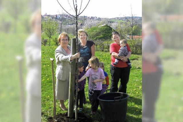 Sparvertrag für einen Baum