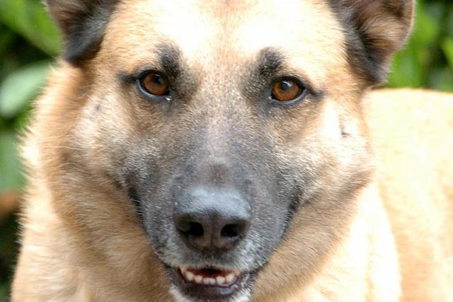 Polizei findet erneut giftige Köder für Hunde