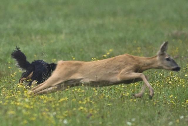 Jäger: Hunde gehören jetzt an die Leine