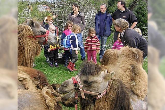 Menzenschwander Kinder durften auf Kamelen reiten