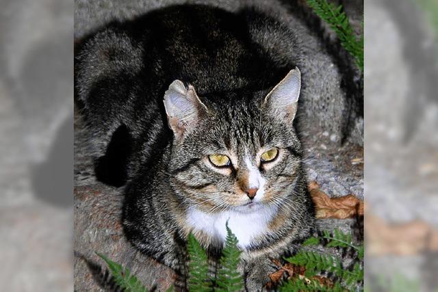 Katzenhaus sucht Spender