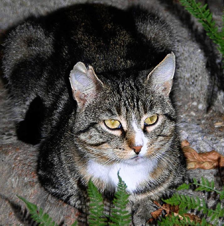 Bubi ist eine der Katzen, die im Katzenhaus Zuflucht gefunden haben.   | Foto: silke Kohlmann