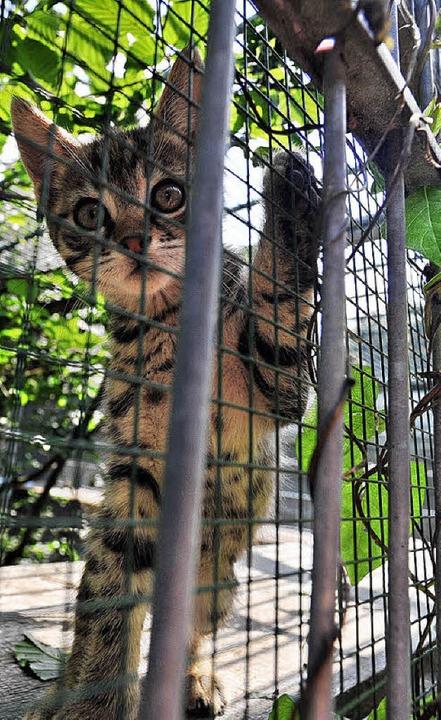 Allein 300 Katzen hat das Tierheim 2009 vermittelt.     Foto: bamberger