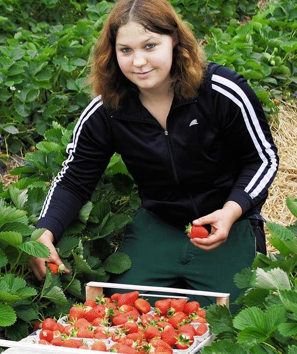 erdbeersaisonerdbeerenSabrina Brandste...rch-Zusenhofen, beim Erdbeerenpflücken  | Foto: rob