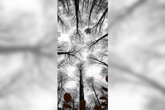 Der Stadtwald soll sich wieder lohnen