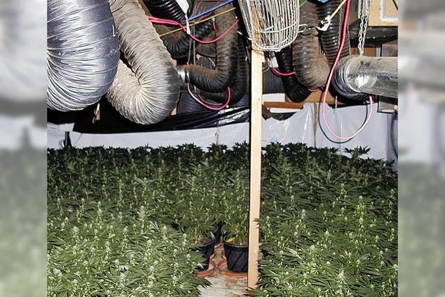 Haschischbauer soll kiloweise Cannabis verkauft haben