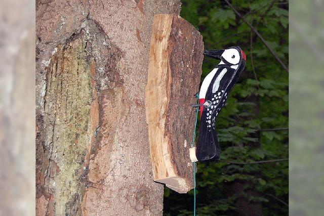 Vogellehrpfad: Vom Zauber der Vogelwelt