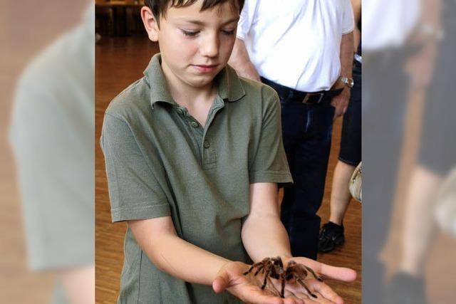 Mutige nahmen die Spinnen in die Hand