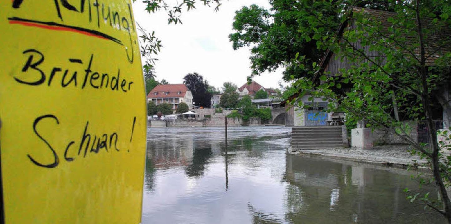 Blick aufs Rheinufer mit der Warnung, den Schwan-Nachwuchs nicht zu stören.    Foto: Ralf Staub