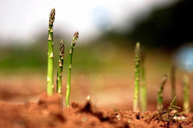 Diebe stehlen kiloweise grünen Spargel